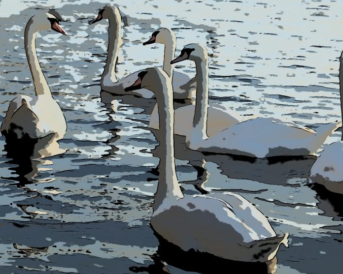 The Six Swans by the Brothers Grimm
